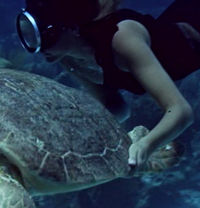 Domino Swims with a Turtle